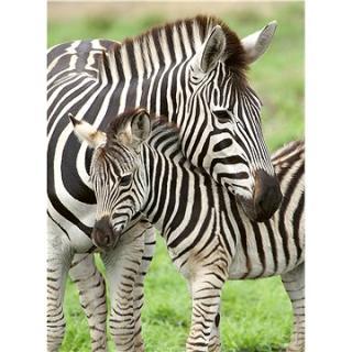 Ravensburger 129485 Obľúbené zebry 300 dielikov